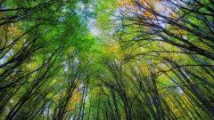 جنگل فتاتوی خمام به عنوان اثر ملی طبیعی ثبت شد