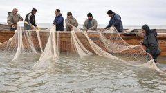 افزایش صید ماهیان استخوانی از سواحل گیلان