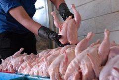 دلیل کمبود مرغ در گیلان چیست؟